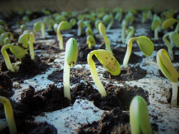 germination permaculture