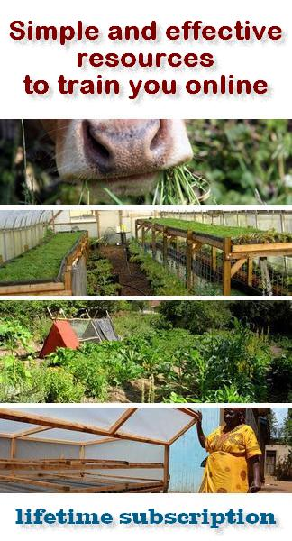 training on line permaculture aquaponics africa