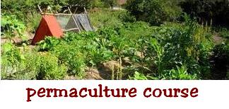 permaculture training africa