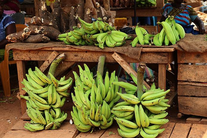 bananes plantains conservation